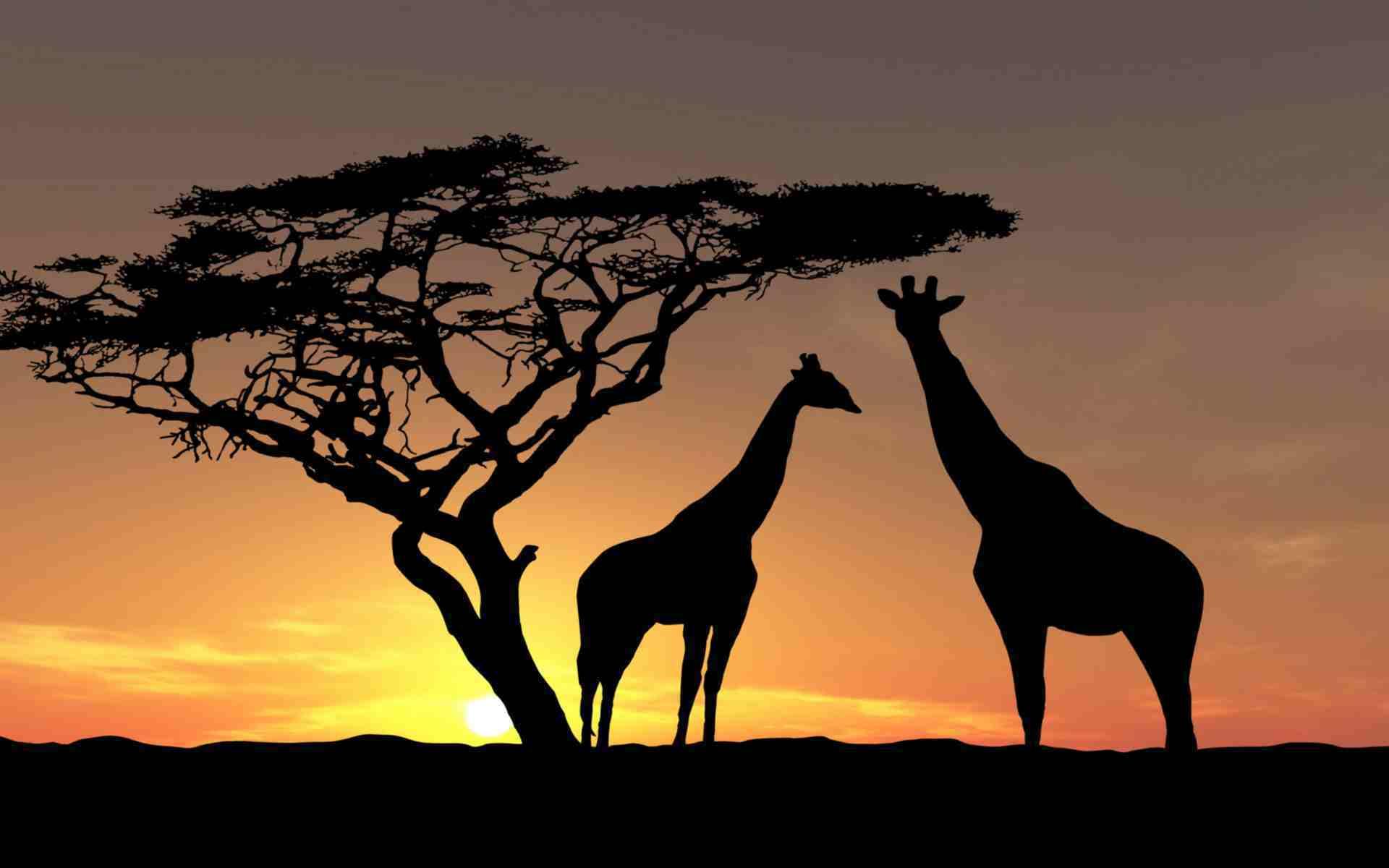 Safari en Afrique, je vous donne la meilleure adresse